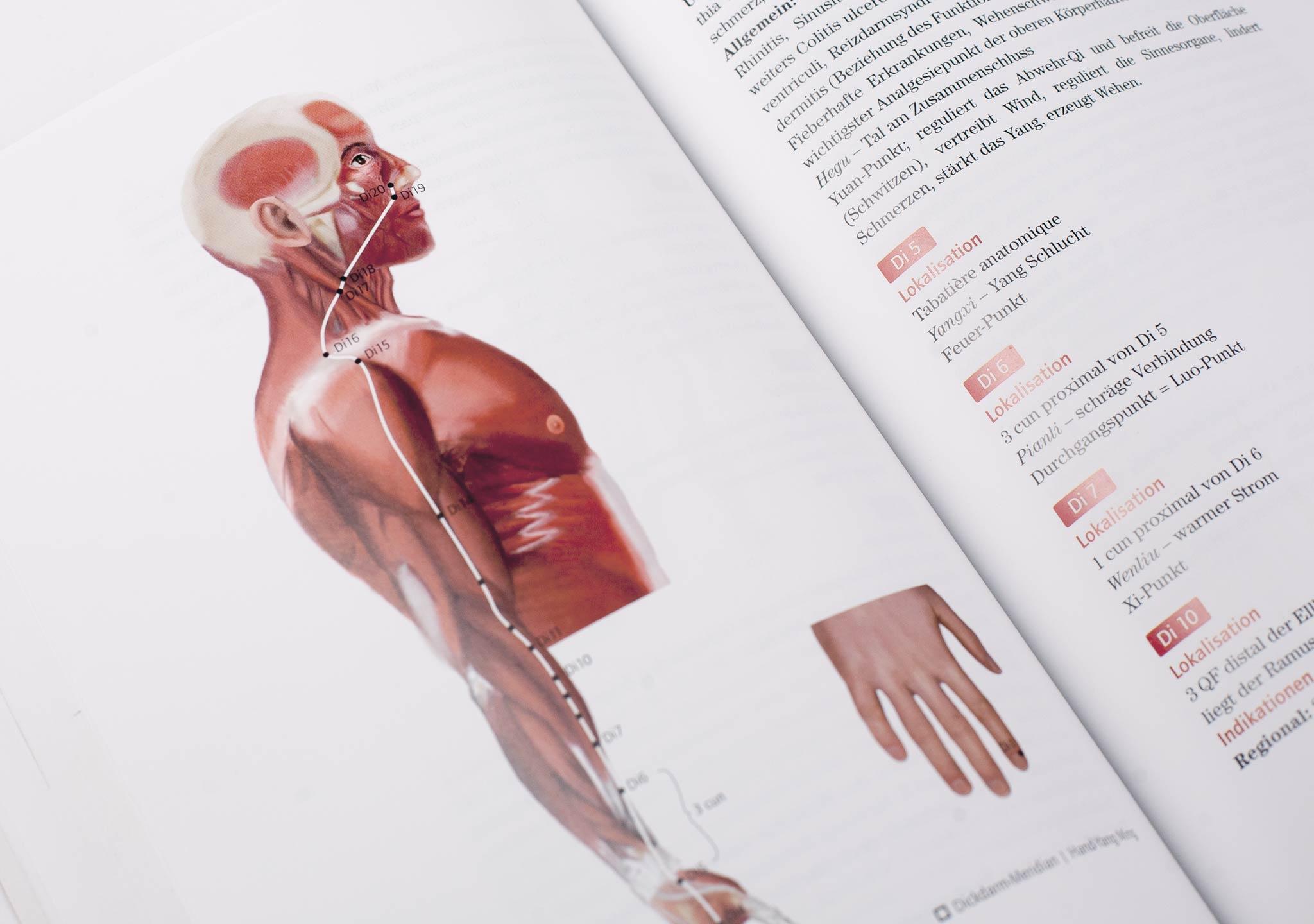 Institut Wolkenstein | Anatomische Illustrationen - Illustrator Wien ...